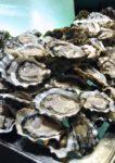 seafood buffet dinner the mill cafe grand millennium kuala lumpur oyster