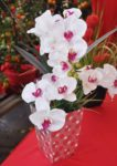 chinese new year street market 2016 da men usj subang jaya flower