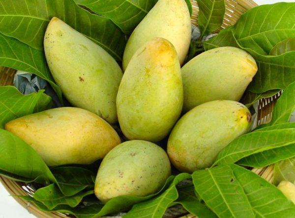 juice works malaysia mango fruit