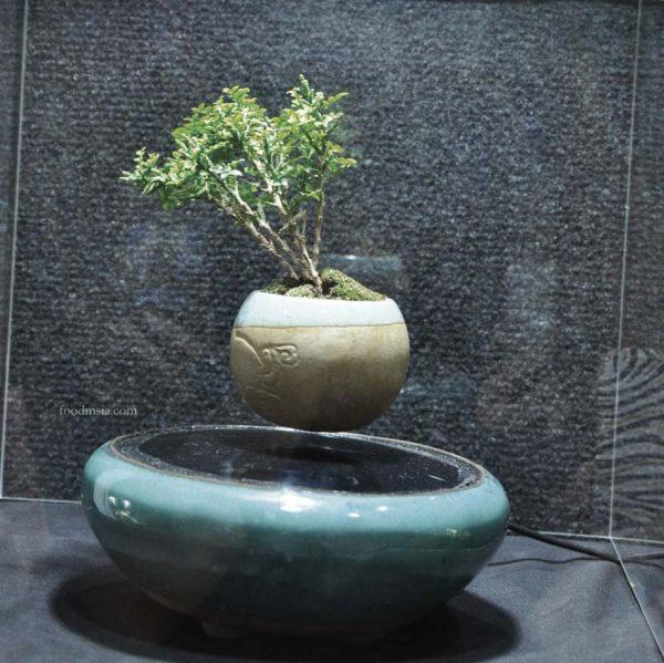 maha 2016 maeps serdang malaysia air bonsai urban green cabin