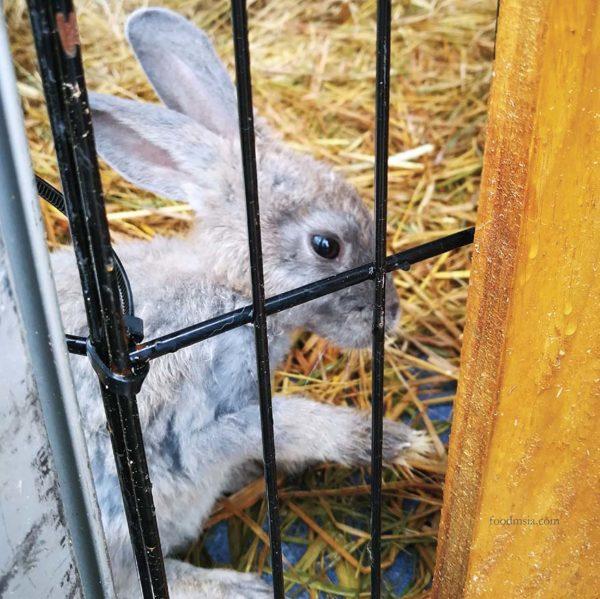 hppnk 2017 maeps serdang hppnk25 petting zoo rabbit