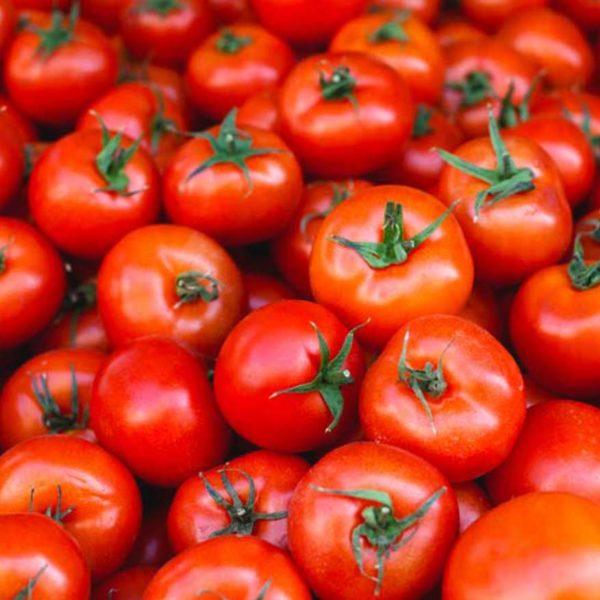 voqq skin care tomato extract