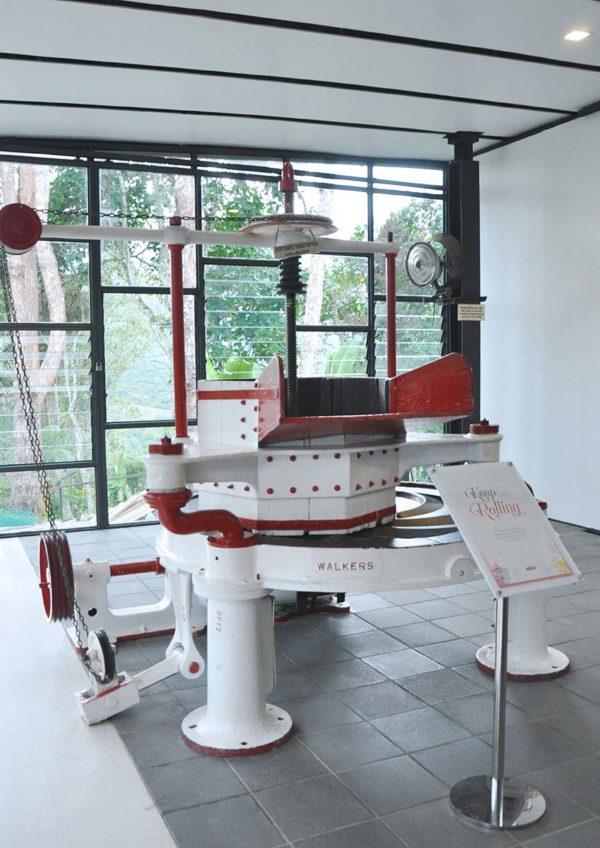 boh sungei palas tea centre cameron highland rolling machine