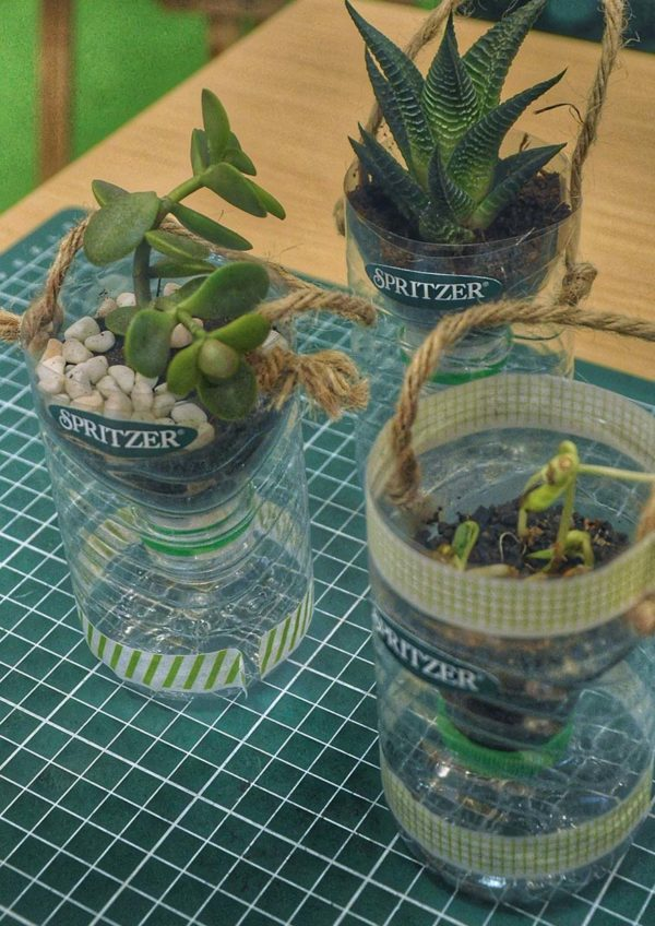 spritzer 30 years of natural goodness potting plant