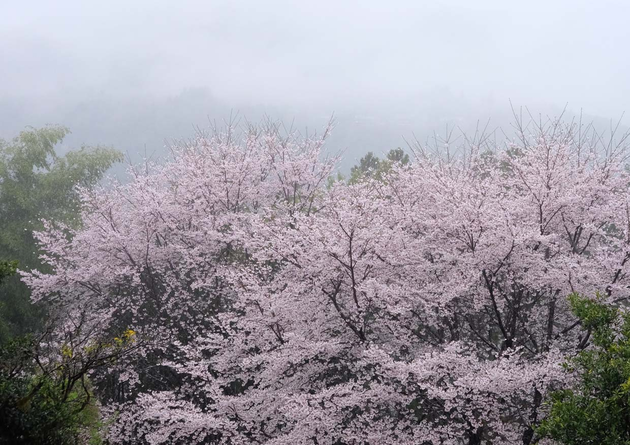 5 Off-The-Beaten-Path Cherry Blossom Tours To Avoid Crowds