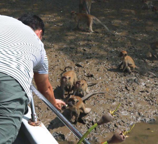 sepang selangor travel spot mangrove tour
