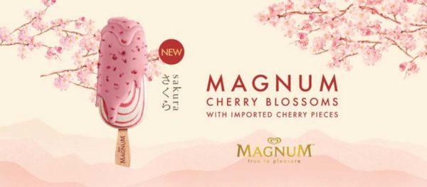 magnum cherry blossoms spring time sakura bloom contest
