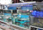 red gold steamboat restaurant taman kasturi batu 11 cheras fresh seafood